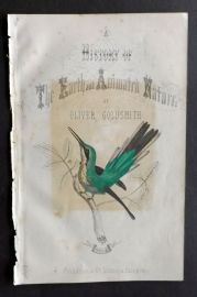 Goldsmith 1851 Hand Col Bird Print. Hummingbird, Illus. Title Page.